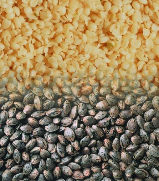 Hemp Nut Seed
