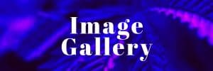Image Gallery 1200x