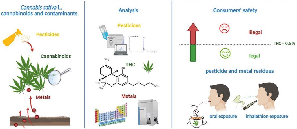 Toxicology of Smokable Hemp